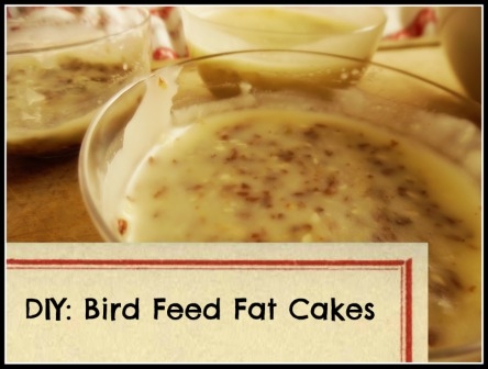 Bird Feed Fat Cakes