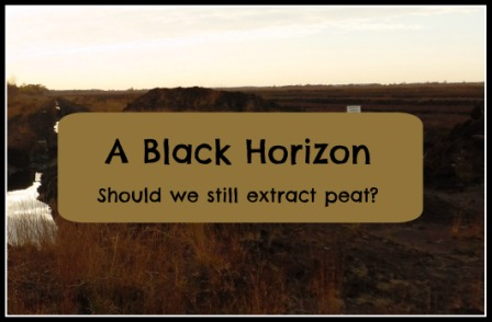 a black horizon