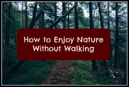How to Enjoy Nature Without Walking