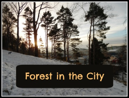 forest in the city