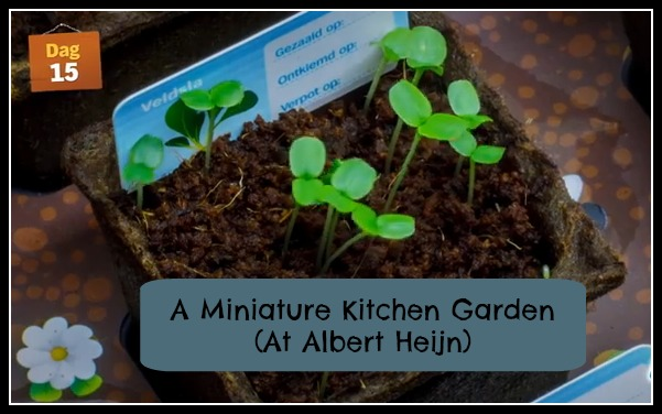 Miniature Kitchen Garden