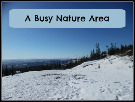 A Busy Nature Area