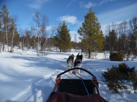 A bit later on, we went to the lovely town of Røros where we got to go dog sledding as well! Wow. What an amazing sport!