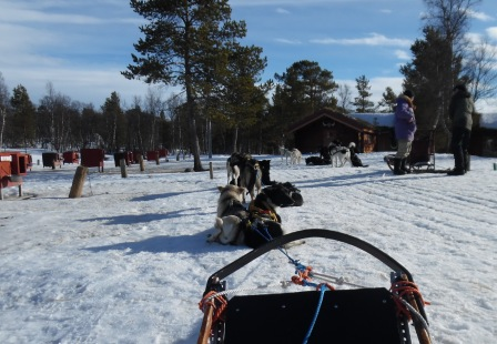 dogsledging break