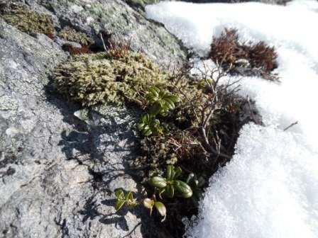 plants under the snow