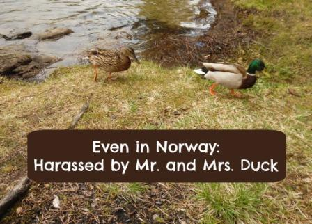mr. mrs. duck top