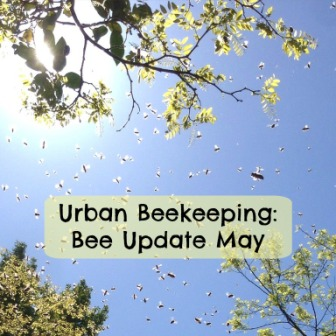 bee update may