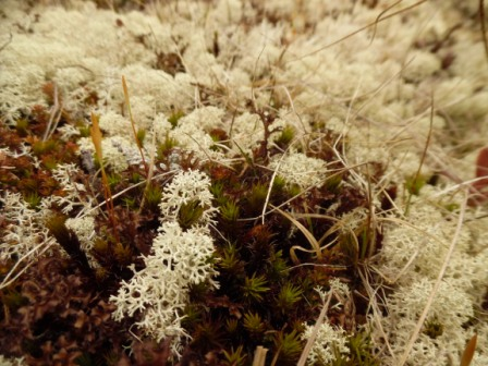 Call me a crazy biologist, but I am going to miss all the lovely mosses.