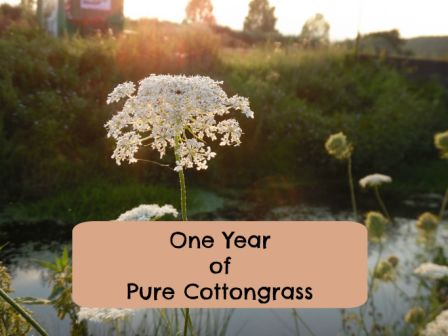 one year pure cottongrass top