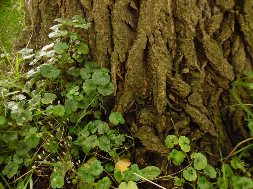 tree trunk with greens