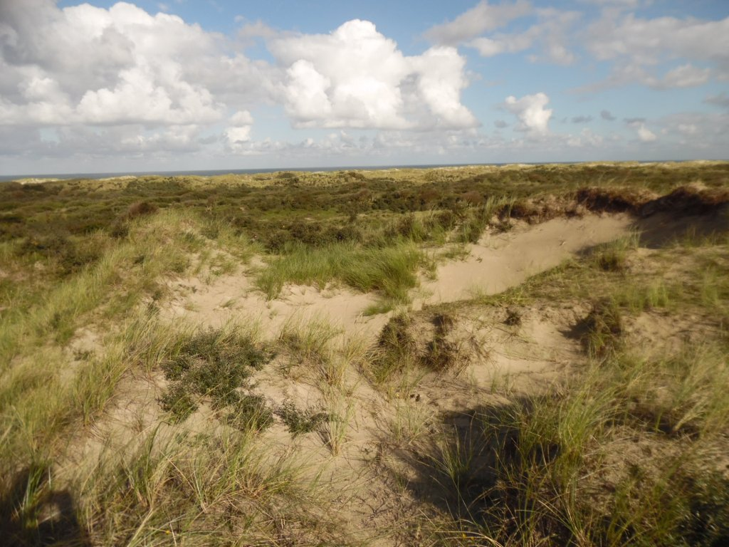 Some of the dunes on Terschelling